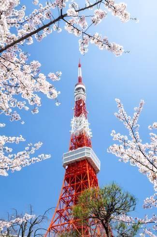 Tokyo Tower During The Cherry Blossom Season Minato Tokyo Japan Photographic Print Jan Christopher Becke Art Com In 2021 Tokyo Tower Cherry Blossom Season Tokyo Cherry