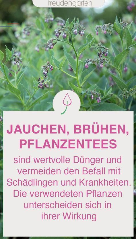 Pinterest Deutschland Blumenbeetanlegen Viele Unkrauter Sind Nicht Nur Lastig Sondern Auch Sehr Hilfreich Als Jauche Bruhe Oder Tee Starken Und Dungen I 2020