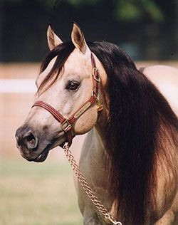 Hollywood Dun It  One of the greatest reining horses