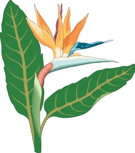 Web Development Birds Of Paradise Flower Art Paradise Plant