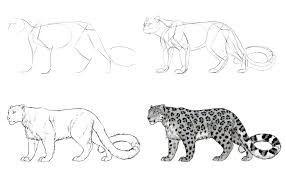 Pin De Martin En Felinos Dibujo De Animales Bocetos De Animales Leopardo Dibujo