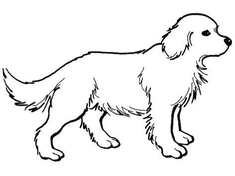 Animais Domesticos Para Pintar E Imprimir Cao Desenho Fotos De