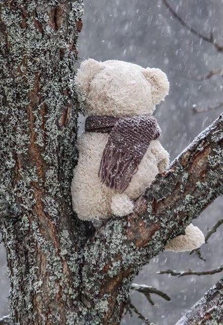 23 pins zu bärenwand für 2019  teddy bilder lustige