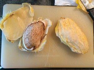 Faire Germer Un Noyau De Mangue Noyau Mangue Mangue Avocatier