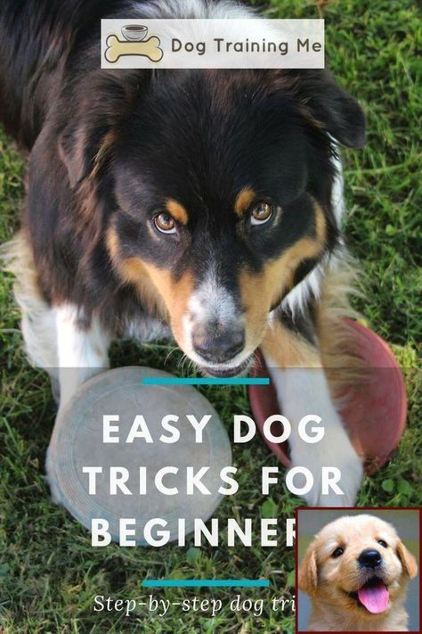 Six Ways For You And Your Dog To Prepare For Labor Day Dog
