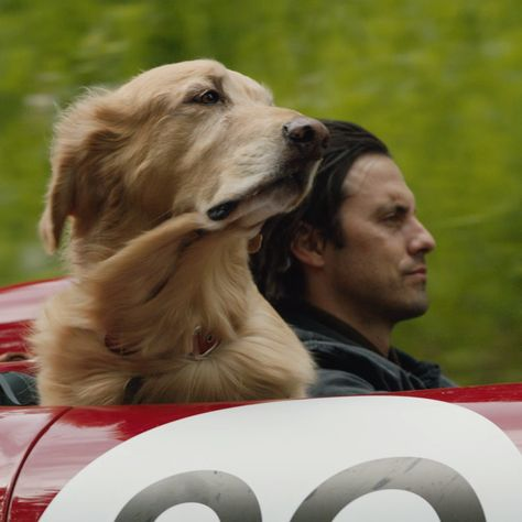 Art of Racing in the Rain - In Theaters August 9