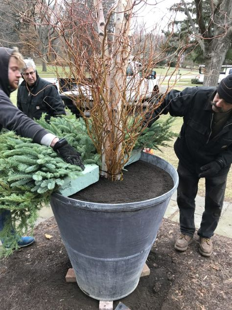 Dirt Simple | Gardening and Landscape Blog by Deborah Silver - Part 4