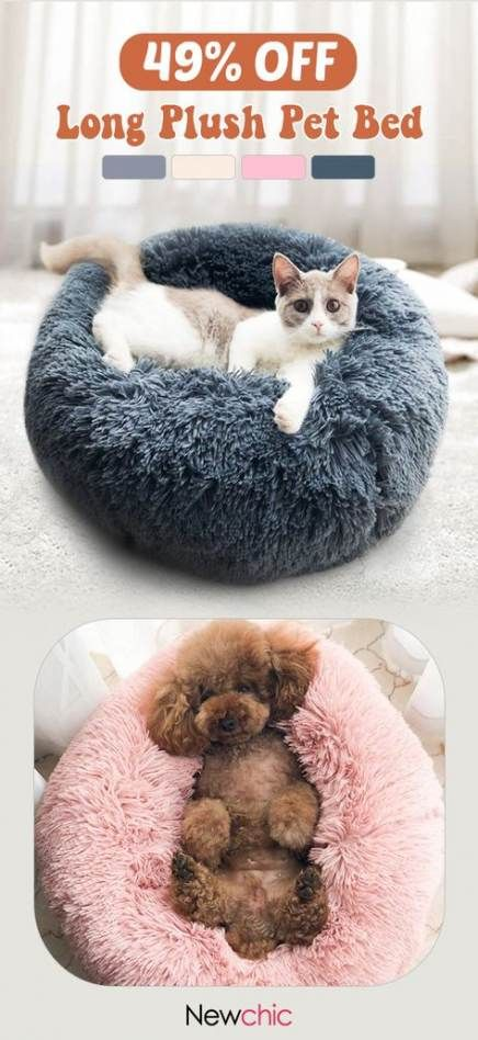34 Ideas Cats Funny Bed For 2019 Cats Funny Pet Beds Plush