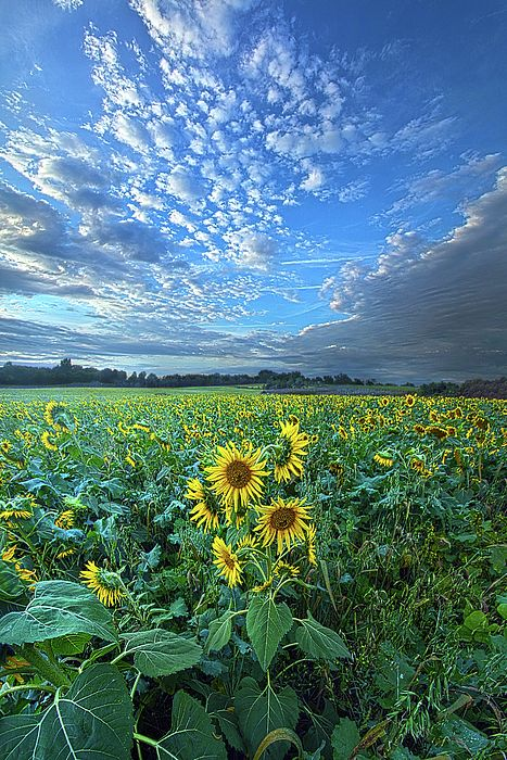 Flowers Of The Sun By Phil Koch Landscape Photography Nature Photographs Nature Pictures