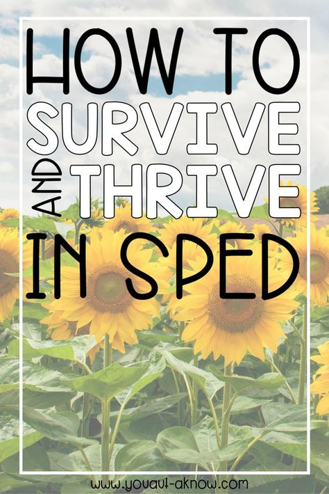 25 Ways to Survive and Thrive in SPED