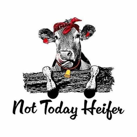 this made me laugh so hard!!! #currentmood #nottodayheifer #nottoday #notintoit #toopeopley #farmlife #countrygirl #countryliving