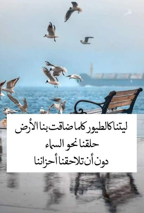 Pin By صورة و كلمة On كلمات راقت لي Quotes Romantic Love Quotes Postive Quotes Favorite Quotes