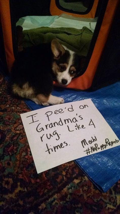 Dog Shame | I pee'd on Grandma's rug. Like four times.   ...