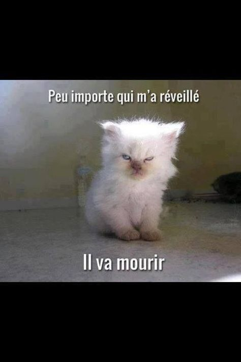 "...ne pas réveiller les chatons = don't wake up kittens ... ""it doesn't matter who woke me .. he's gonna die"""