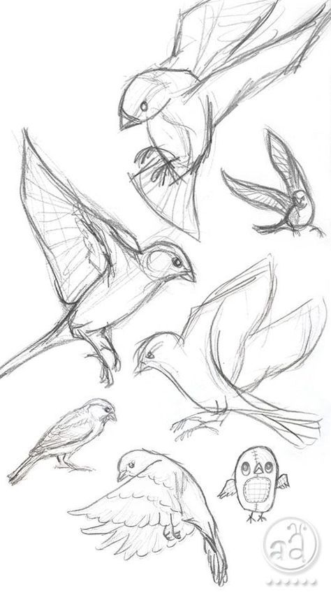 40 Free and Simple Animal Sketches Ideas and Inspirations for Drawing – Samir – Animal Draw… . Secrets of being well-groomed 40 Free and simple animal sketches Ideas and inspiration for drawing – Samir – Animal Draw… . Animal Art, Sketches, Animal Drawings, Sketch Book, Art Drawings, Animal Sketches, Bird Sketch, Drawing Sketches, Bird Drawings