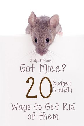 20 Ways To Get Rid Of Mice Getting Rid Of Mice Mice Repellent Catch A Mouse