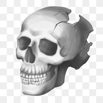 Skull Google Search Human Skull Skull Skull Carving