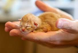 Image Result For Ginger Kittens Orangekittens Newborn Kittens Baby Kittens Kittens