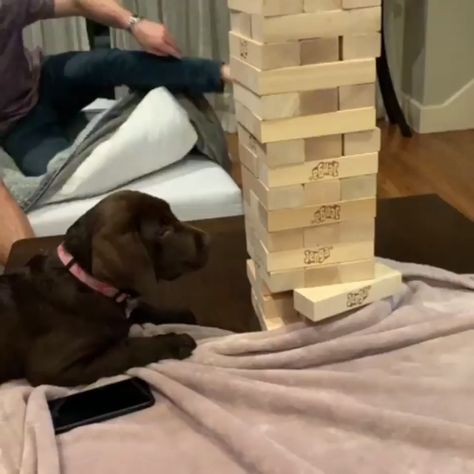 Photo of The best Jenga player.