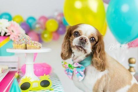 Ballons and bowties - Dog Birthday Cake Smashes to Make You Smile - Photos