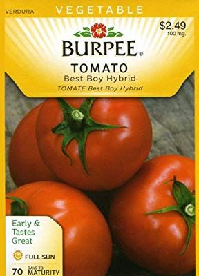 Burpee 66143 Tomato Best Boy Hybrid Seed Packet Tomato Seed Packets Seeds