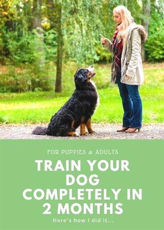 Aetertek Dog Training Collar Therapy Dog Training Near Me