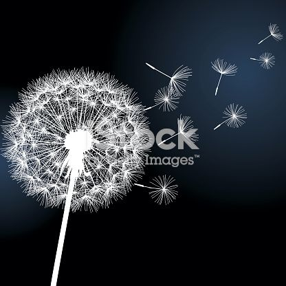 Flower Dandelion White On Black Background Vector Illustration Black Background Painting Black Paper Drawing Dandelion Drawing