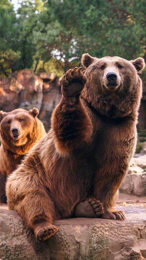Animal / Bear (1080x1920) Mobile Wallpaper