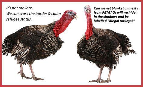 Wild Turkey Anatomy Diagram Application Wiring Diagram