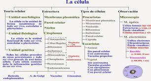 Esquema Celular Y Su Estructura Buscar Con Google Teoría