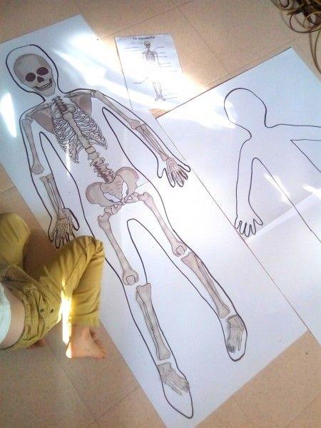 Notre Decouverte Du Corps Humain Lien Squelette A Telecharger Anatomie Corps Humain Corps Humain Squelette Humain