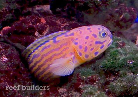Pin On Reef Safe Fish