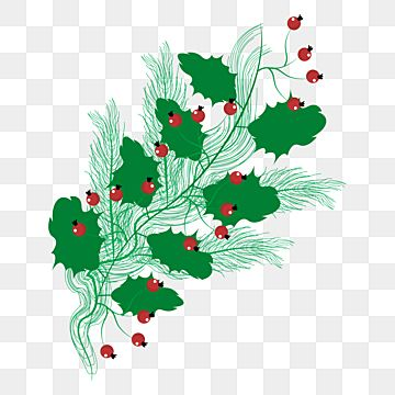 Lovely Holly Christmass Tree Png Element Holly Berry Gift Png And Vector With Transparent Background For Free Download Green Gifts Christmas Magic Green Candy