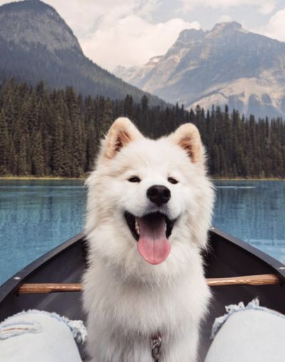 Adventure Dog.. Animal and River.. #Alliance#Trade#Source#dog#river#coolweather#smooth#silky#bluesky#water#mindblowing#bignature#geographical#moment