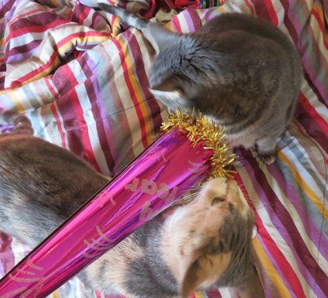 Happy New Year Feat Meeko Oats Happy New Year Happy Cats