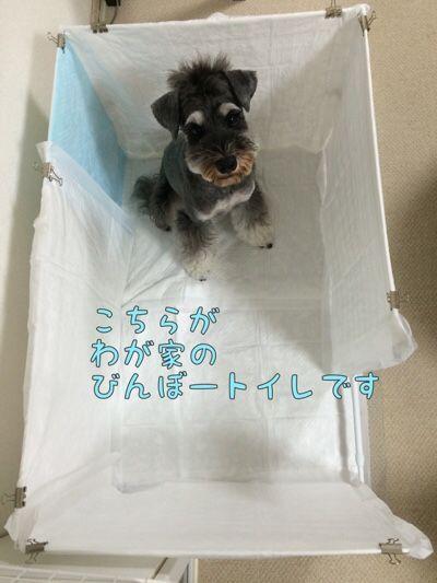 進化したトイレ ミニチュアシュナウザー トミーとラルフの生活 犬のトイレ 犬のケージアイデア 犬の部屋