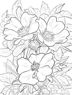 Flowers Coloring Pages Printable Coloringfile In 2020