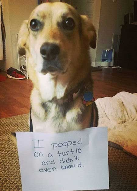 Funny Dog Shaming Pictures Done Right Dog Shaming Pictures Dog