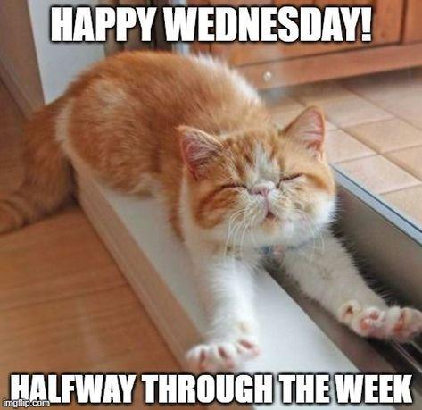 Happy Wednesday! Halfway through the week. #Humpdaymemes #Funnyhumpdaymemes #Wednesdaymemes #Wednesdaymeme #Funnywednesdaymemes #Wednesdayevememes #Wednesdaymemesforwork #Wednesdayworkmemes #Wednesdaymorningmemes #Wednesdaymemescute #Funnywednesdayimages #Funnywednesdayquotes #Happywednesdaymemes #Memes #Funnymemes #Wednesdaymemespositive #Bestwednesdaymemes #Wednesdaymemesanimals #Wednesdaysmeme #Funnyquotes #Sarcasticquotes #Hilariousquotes #Humorousquotes #Laughablequotes #therandomvibez