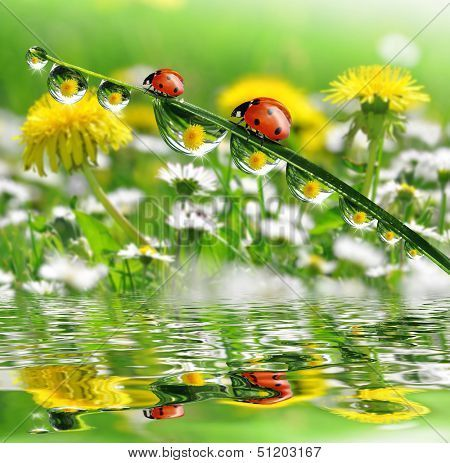 dew drops with ladybugs  Poster