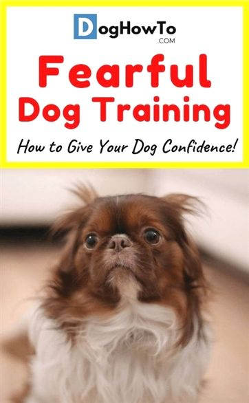 Tops Dog Training In Grayslake Il Dog Training Obstacle Course