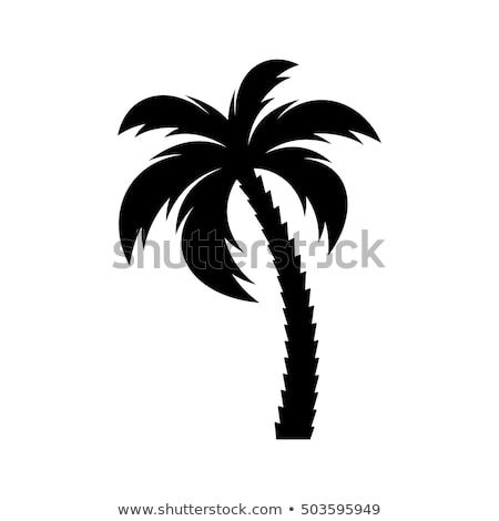 Black Vector Single Palm Tree Silhouette Icon Isolated Palm Tree Drawing Palm Trees Painting Palm Tree Clip Art