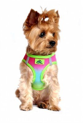 Rainbow Ombre American River Choke Free Dog Harness From Simply