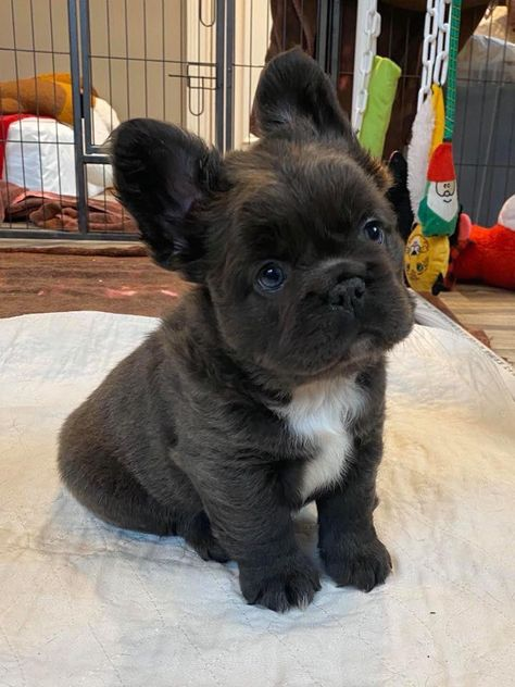 Cute Overload: Internet`s best cute dogs and cute cats are here. Aww pics and adorable animals. Super Cute Puppies, Baby Animals Super Cute, Cute Baby Dogs, Cute Little Puppies, Cute Dogs And Puppies, Cute Little Animals, Cute Funny Animals, Doggies, Cute Fluffy Dogs