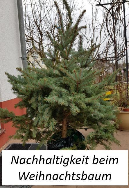 Das Thema Nachhaltigkeit ist in aller Munde und kann auch beim Kauf des Weihnachtsbaumes praktiziert werden. Warum nicht ein Baum im Topf kaufen oder sogar mieten?