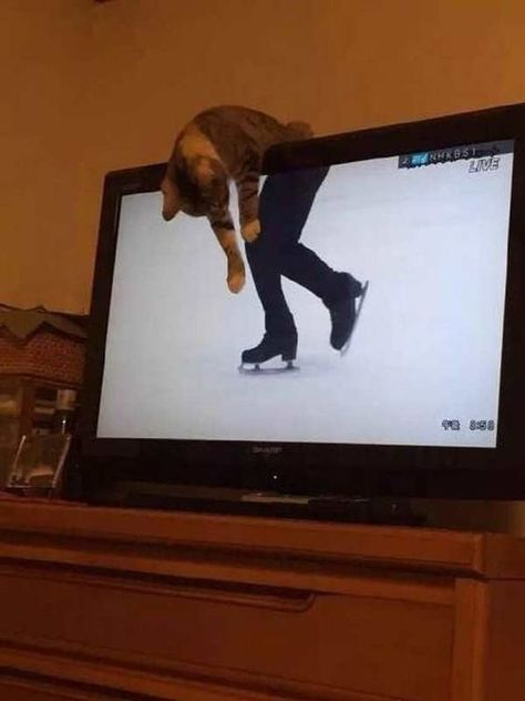 Perfect timing, as this attempts to sit on top of a flatscreen tv, when ice skating ⛸ is on ( cats much preferred old style wide tv's as they heated up and had a wide shelf to chill on ! ) So to cats, these contemporary tv's are a very bad development ‼️ Funny Animal Jokes, Funny Cat Memes, Cute Funny Animals, Funny Animal Pictures, Cute Baby Animals, Funny Cute, Cute Cats, Random Pictures, Funniest Pictures