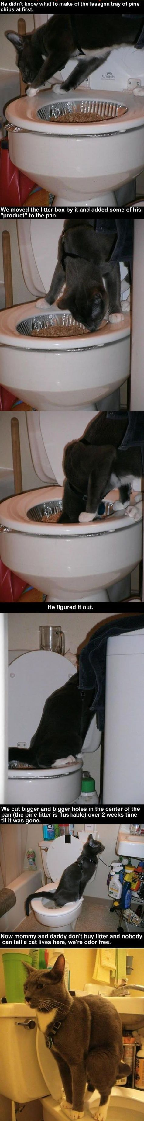 How To Teach Your Cat To Poop In The Toilet cute animals cat cats adorable animal kittens pets kitten interesting good to know Animals And Pets, Funny Animals, Cute Animals, Funny Pets, Crazy Cat Lady, Crazy Cats, Bb Chat, Gatos Cats, Litter Box