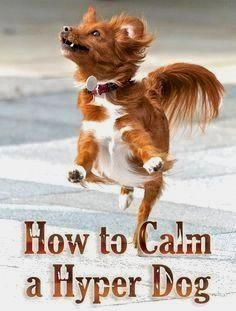 Dog Obedience Training Basic Commands And Pics Of Dog Behavior