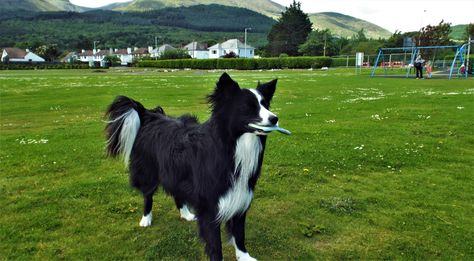 Asha Was Here Where The Mountains Of Mourne Reach Down To The Sea In Newcastle County Down Northern Ireland With Images Border Collie Scenery Pictures Pictures