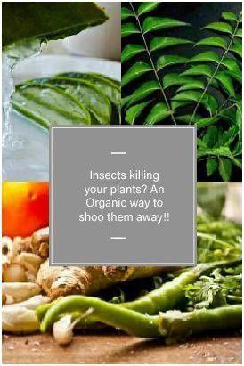 9fc2302c8083fcb5941d2d66e55268b9 - Is Terro Safe For Vegetable Gardens